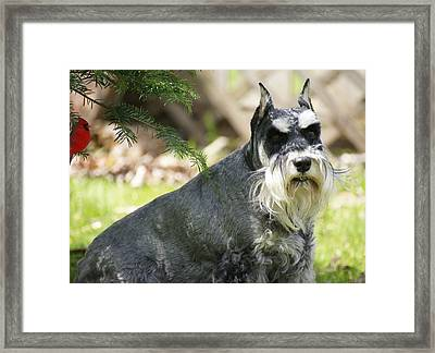 Unaware Framed Print by David and Lynn Keller