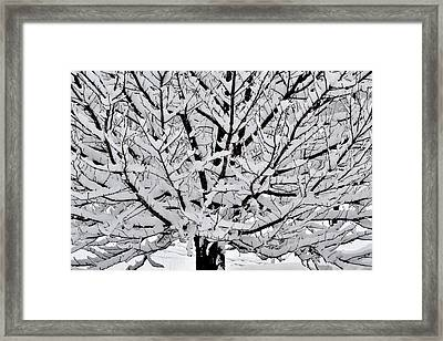 Unbelievable Tree Framed Print