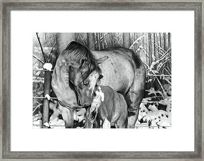 Unbreakable Bond Framed Print