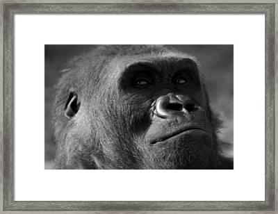 Undecided Framed Print by Brad Scott