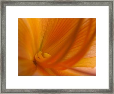 Undeniable Framed Print by Juergen Roth