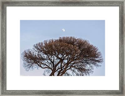 Under A Glass Moon Framed Print by Andrea Mazzocchetti
