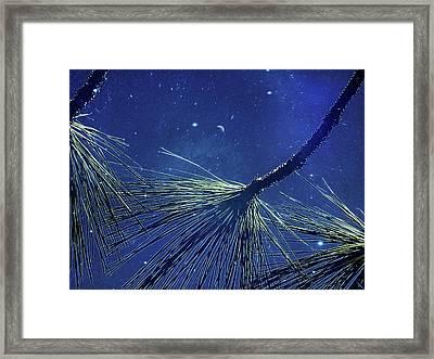 Under A Ponderosa Sky  Framed Print