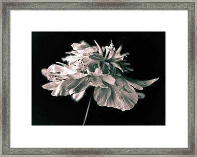 Under A Silvery Moon Framed Print