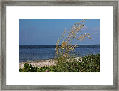 Framed Print featuring the photograph Under A Summer Sky by Michiale Schneider