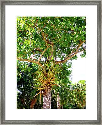 Framed Print featuring the photograph Under A Tropical Tree M by Francesca Mackenney