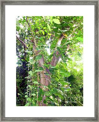 Framed Print featuring the photograph Under A Tropical Tree With Vines by Francesca Mackenney