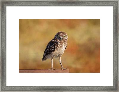 Under A Watchful Eye Framed Print
