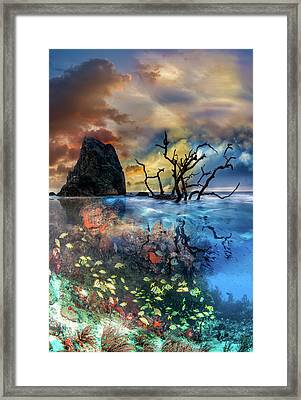 Under And Over The Reef Framed Print by Debra and Dave Vanderlaan