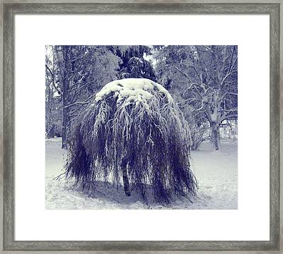 Framed Print featuring the photograph Under Cover by Sami Tiainen