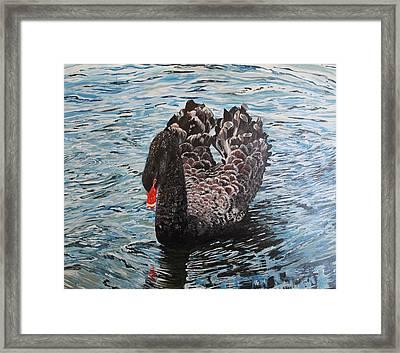 Under Full Sail Black Swan Framed Print by Leonie Bell
