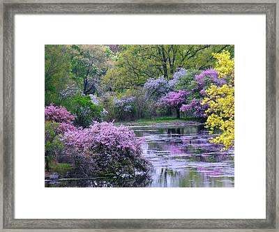 Under Spring's Spell Framed Print