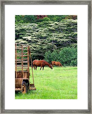 Under The Albesias Framed Print by Mary Deal