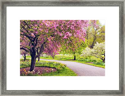 Under The Apple Tree Framed Print by Jessica Jenney