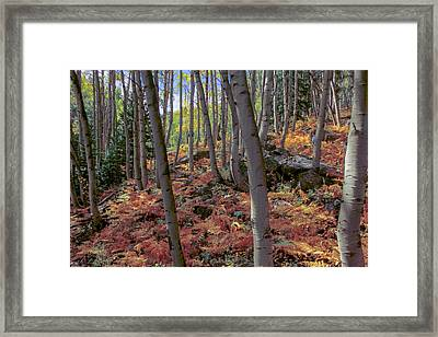 Under The Aspens Framed Print