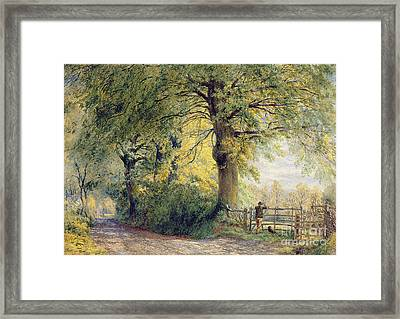 Under The Beeches Framed Print by John Steeple