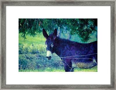 Under The Cedar Framed Print by Jan Amiss Photography