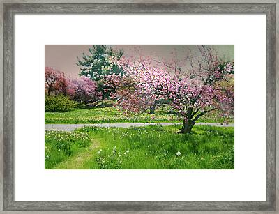 Framed Print featuring the photograph Under The Cherry Tree by Diana Angstadt