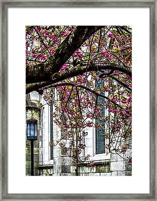 Under The Cherry Tree Framed Print