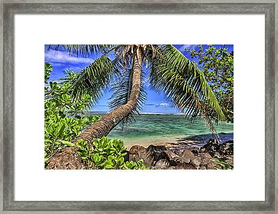 Under The Coconut Tree Framed Print