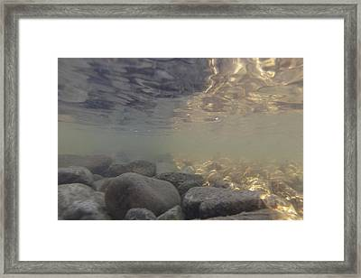 Under The Murky Lake Framed Print by Carolyn Brown