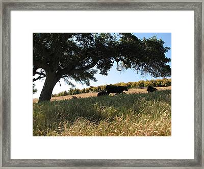 Under The Oak Tree Framed Print