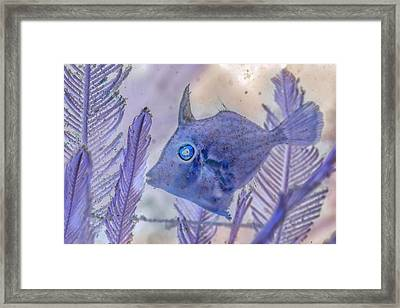 Framed Print featuring the photograph Under The Sea Colorful Watercolor Art #8 by Debra and Dave Vanderlaan