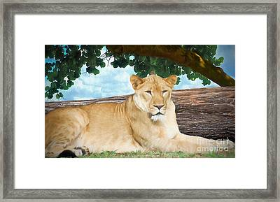 Under The Seagrape Framed Print