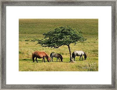 Under The Shade Framed Print