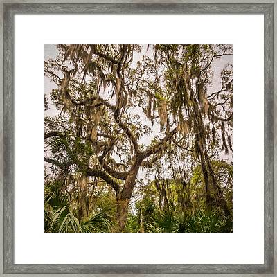 Under The Shade Of A Live Oak - Artistic Framed Print