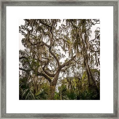 Under The Shade Of A Georgia Live Oak Framed Print