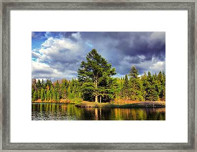 Under The Shade Tree Framed Print by Gary Smith