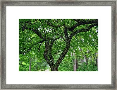 Framed Print featuring the photograph Under The Shade Tree by Tikvah's Hope