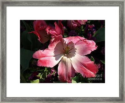 Under The Shadow Framed Print by Judy  Waller