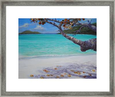 Under The Tree At Magen's Bay Framed Print