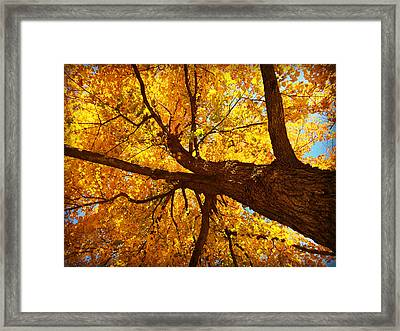 Under The Yellow Fall Leaves Framed Print by Kathy M Krause