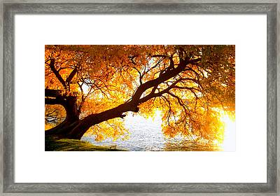 Framed Print featuring the photograph Under The Yellow Tree by Viviana  Nadowski