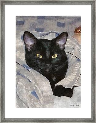 Undercover Kitten Framed Print by Jeff Kolker
