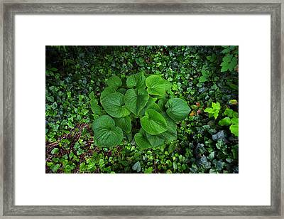 Framed Print featuring the photograph Undergrowth by Anthony Rego