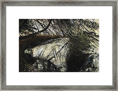 Undergrowth Framed Print by Calum McClure