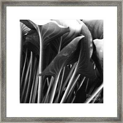 Underneath The Hosta In B And W Framed Print