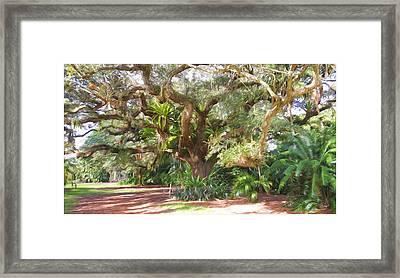 Underneath The Tree At Fairchild Troplical Garden Framed Print