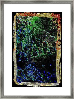 Undersea Gardens Framed Print by Will Borden