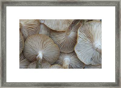 Underside Of Mushrooms Framed Print by Greg Adams Photography