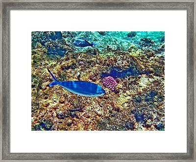Underwater Framed Print by Andy Za