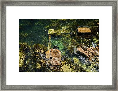 Framed Print featuring the photograph Underwater Art At Cannery Row by Susan Wiedmann