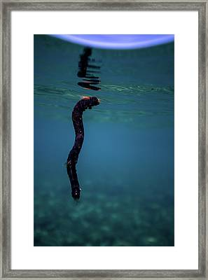 Underwater Branch Framed Print