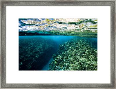 Underwater Coral Reef Views In Shallow Framed Print by Tim Laman