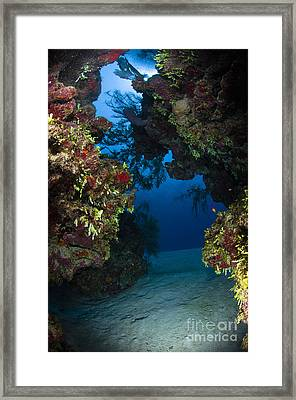 Underwater Crevice Through A Coral Framed Print by Todd Winner