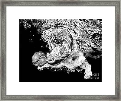Underwater Dog Framed Print